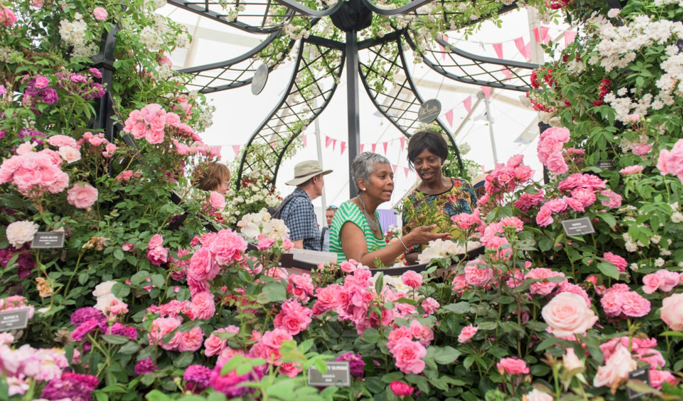 Chinese uk flower tours hampton court flower show beiwei 55 - Hampton court flower show ...